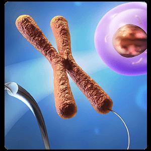 infertilitgenetik