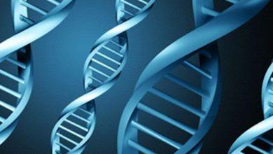 Tüp Bebek Tedavisinde Embryolarda Genetik Ayıklama Ne Zaman Yapılır?