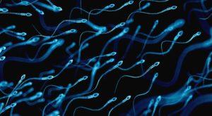 Sperm Morfoloji Bozukluğu İnfertilite Sebebi Midir? Kruger Testi Nedir? 2
